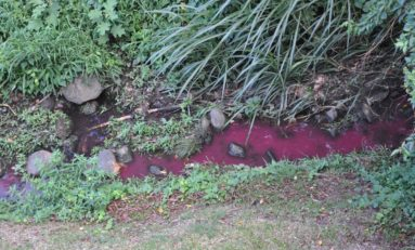 Chronique banale d'une pollution constatée en Martinique