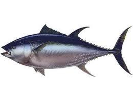 Port bloqué par les marins-pêcheurs ...Baudouin hausse le thon