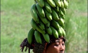 Blocage du port de Fort-de-France en Martinique : Tentative d'embarquement de bananes avortée
