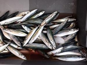 750 000 € versés aux marins‐pêcheurs de la Martinique