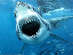 Nouvelle attaque de #requin à l'île de la #Réunion
