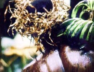 Chlordécone : la #Martinique porte sa croix