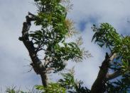 #Taubira : les petits pas d'une irrépressible ambition, (deuxième partie)