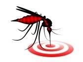 #Chikungunya en #Martinique : 10 % de la population touché par ĺ'épidémie