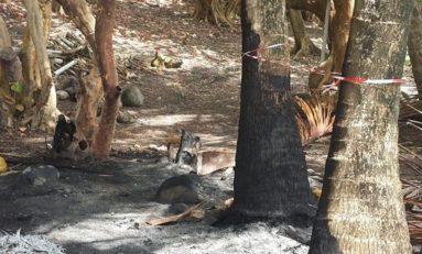 Ma #Martinique à moi : les pollueurs sont des ordures
