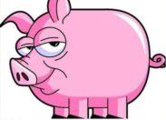 Deux #truies violées par un porc en #Guyane