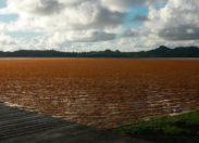 Algues sargasses en #Martinique...et si on nous mentait ?