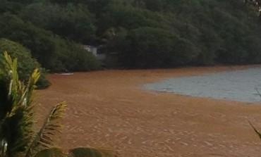 Les algues sargasses rendent visite à Chantal Maignan à domicile