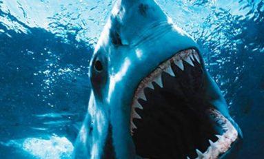 Nouvelle attaque de requin à l'île de La Réunion