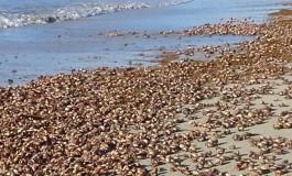 Les bernard l'hermite à l'anse Trabaud en Martinique comme si vous y étiez