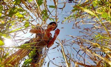 La guerre des graines... (documentaire)
