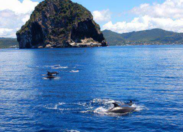 Les dauphins ❤ la Martinique