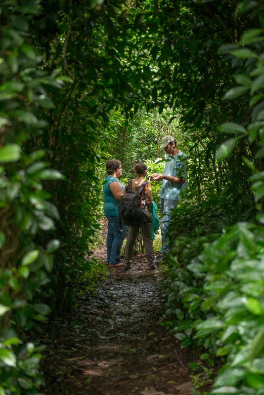 Le Labyrinte en-champ-thé : A la découverte du thé et du géranium made in Réunion – Journées Européennes du Patrimoine à la Réunion