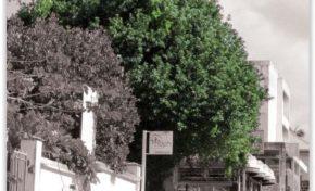 Jardin de l'Hôtel de ville : Arbres connus et méconnus - Journées Européennes du Patrimoine à la Réunion