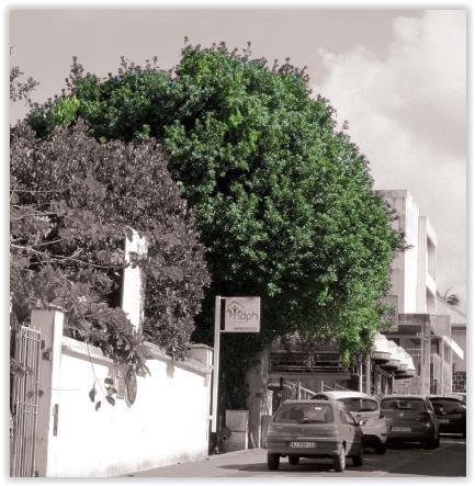 Jardin de l'Hôtel de ville : Arbres connus et méconnus – Journées Européennes du Patrimoine à la Réunion