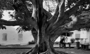 La case Bourbon : Balade autour des arbres du Barachois - Journées Européennes du Patrimoine à la Réunion