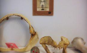 Archives départementales de La Réunion : Inauguration de la résidence d'artiste de Gabrielle Manglou. - Journées Européennes du Patrimoine à la Réunion
