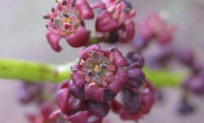 Mascarin - Jardin botanique de La Réunion : Les bois de couleur du jardin botanique - Journées Européennes du Patrimoine à la Réunion