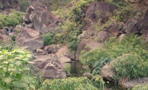 Réserve naturelle nationale de l'étang Saint-Paul : Les patrimoines de nos ravines : la ravine Divon - Journées Européennes du Patrimoine à la Réunion