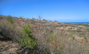 L'Eperon : Randonnée Bruniquel - Journées Européennes du Patrimoine à la Réunion