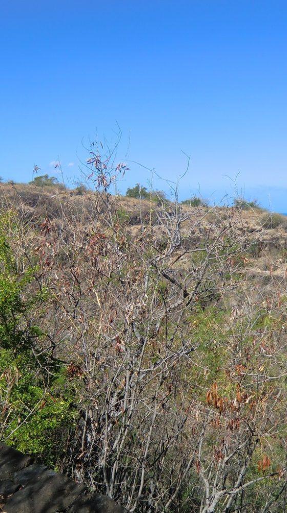 L'Eperon : Randonnée Bruniquel – Journées Européennes du Patrimoine à la Réunion