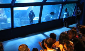 Aquarium de La Réunion : Venez découvrir l'aquarium - Journées Européennes du Patrimoine à la Réunion