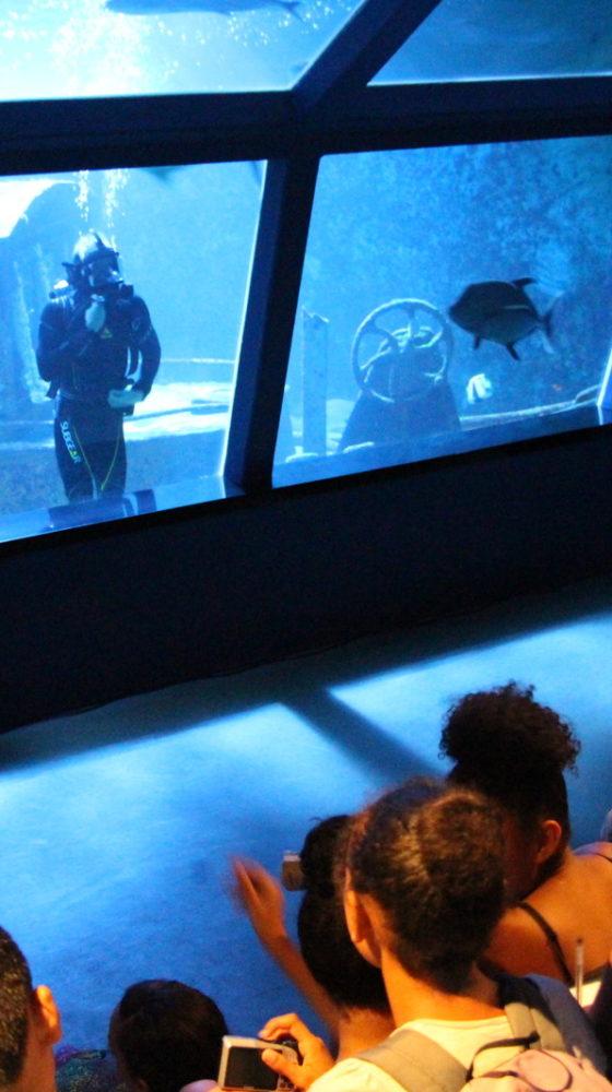 Aquarium de La Réunion : Venez découvrir l'aquarium – Journées Européennes du Patrimoine à la Réunion
