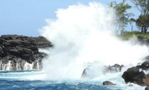 La phrase  du jour [21/02/17] Requin -  La Réunion