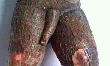 Un manioc un peu maniaque récolté à l'île de La Réunion