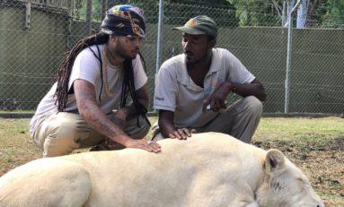 Kalash et les lionnes