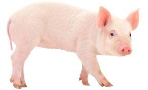 Harvey Weinstein : le porc épique qui paye ses victimes (la suite)