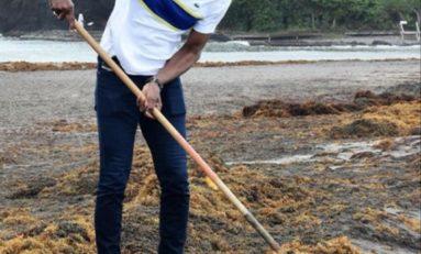 En Martinique les algues sargasses agacent Bruno Nestor Azerot