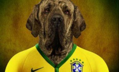 On a retrouvé le chien de Neymar