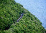 L'image du jour 31/07/18 - Martinique - Flamboyant