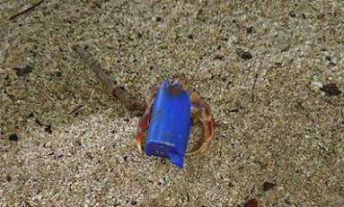 L'image du jour 11/08/18 - Bernard l'hermite - Martinique