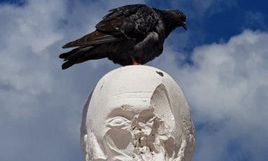 Un pigeon se libère sur la tête de Victor à Schoelcher en Martinique