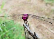 L'image du jour 28/10/18 - Martinique- Nature