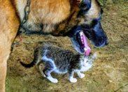 L'image du jour 13/12/18 - Chien...chat
