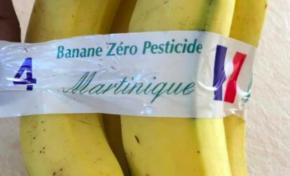 Banane et chlordécone...et pourtant nous ne sommes pas le 1er avril...