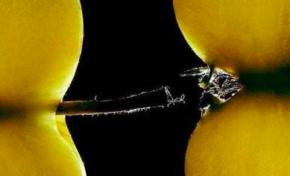 Harcèlement sexuel à Martinique 1ère...ça sent la raie